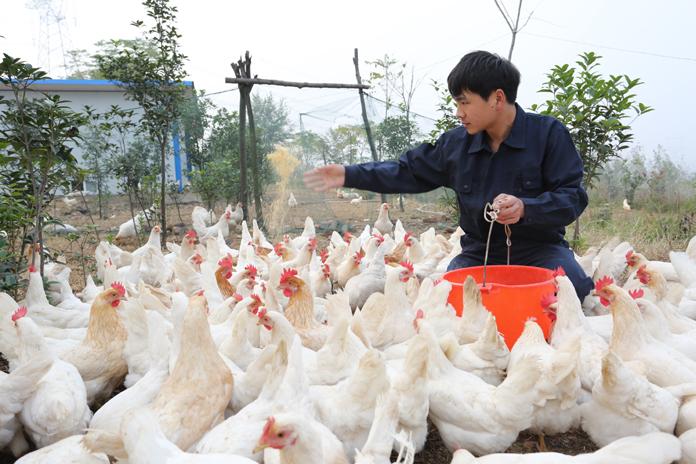 鸡司令(周庄村)   摄影 郭东伟18637532185.jpg