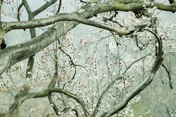 王建中《春》 (2).jpg