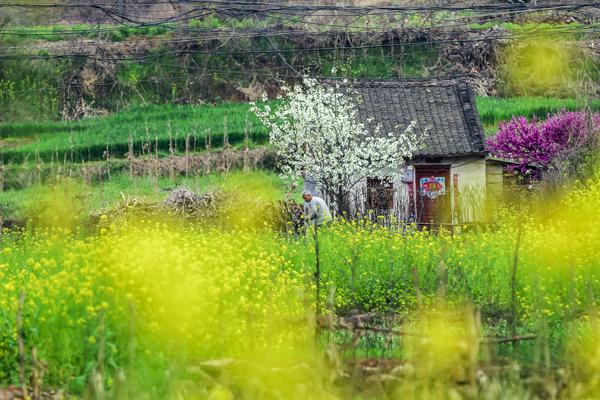 王建中《春》 (5).jpg