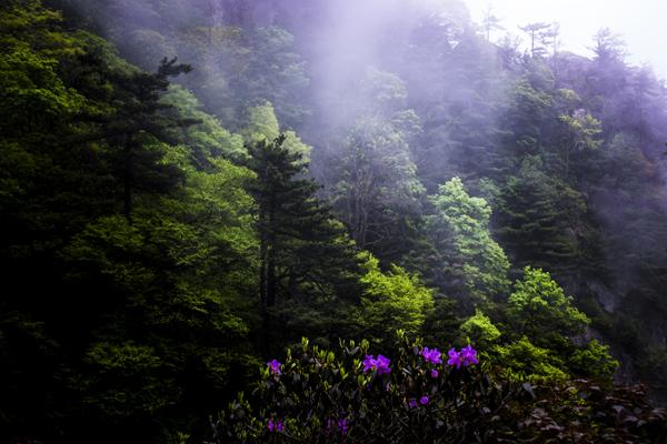 《春山初醒》黄岩--13937565193.jpg