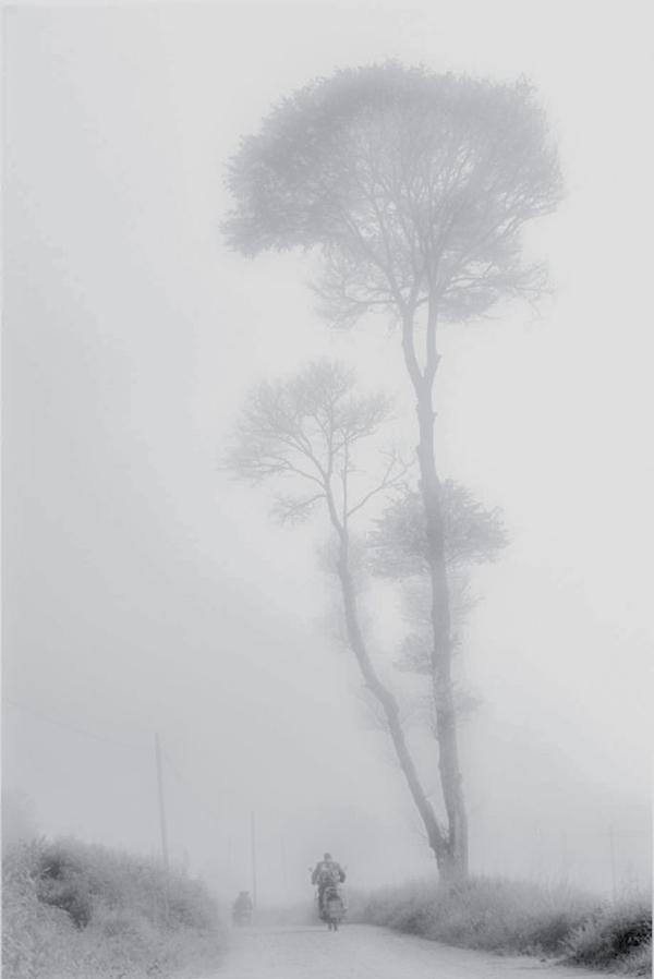 雾叶要宏.jpg